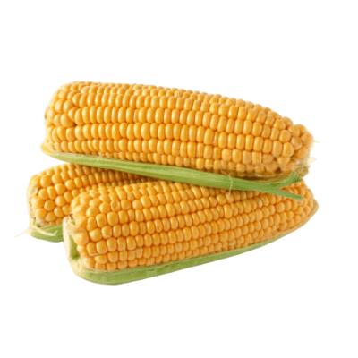 Three Bright Yellow Corn Cobs With Green Husk Still Visible