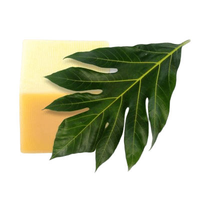 Block Of Emulsifying Vegetable Wax NF Surrounded By Green Leaf