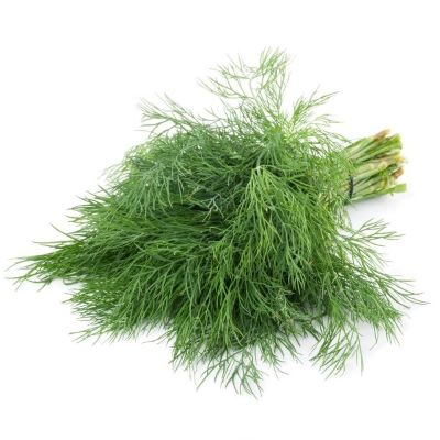Green Fennel Plant On White Background