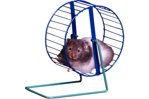 Fat Hamster On A Blue Wheel