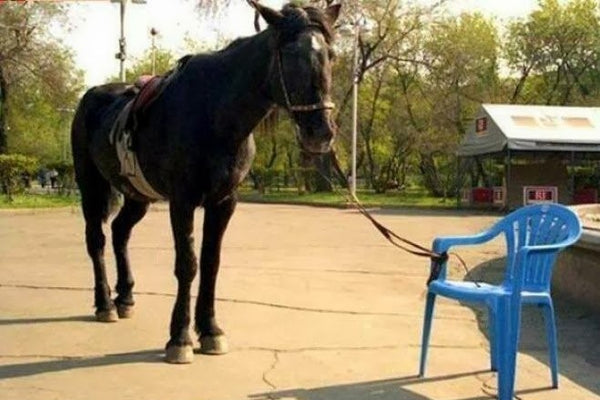 Horse Tied To Chair - Boundaries