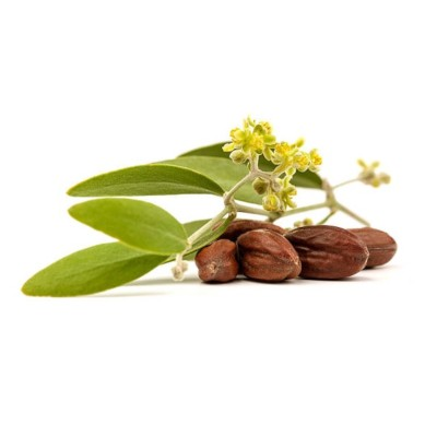 Brown Jojoba Nuts Alongside Green Jojoba Leaves