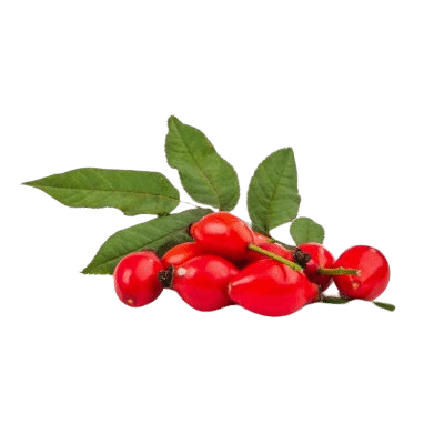 Bright Red Rose Hip Fruits Alongside Green Leaves