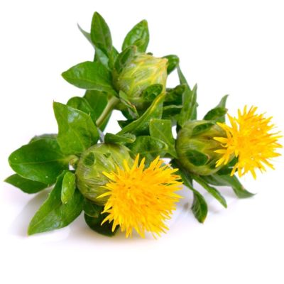 Bright Yellow Safflower With Green Leaves On White Background
