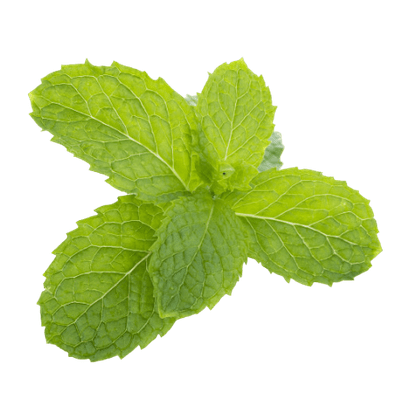 A Bunch Of Bright Green Spearmint Leaves On Transparent Background