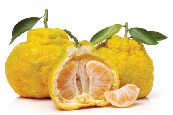 Ugli Fruit on white background
