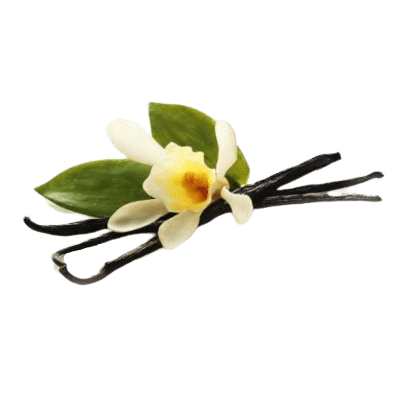 Brown Vanilla Pods Alongside Vanilla Flower & Surrounded By Green Vanilla Leaves