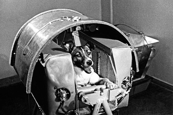 First space Dog Laika