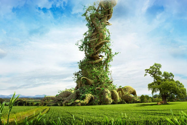 Magical Beanstalk on a summers day in nature