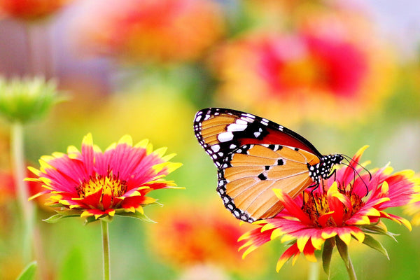 Colourful butterfly on flower