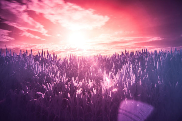 Dreamy Pink & Purple Landscape
