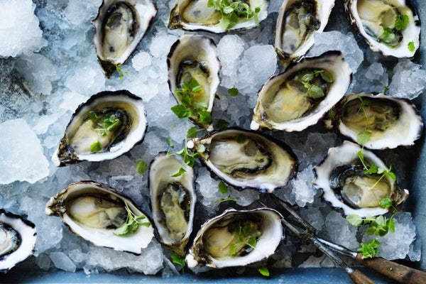 Oysters on a platter of ice