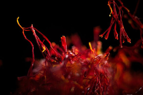 Red saffron spice with dark background