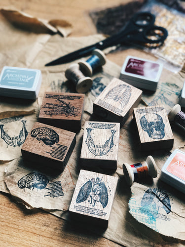 Anatomy Series Rubber Stamps