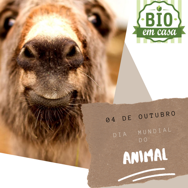 Dia Mundial do Animal - 4 de Outubro