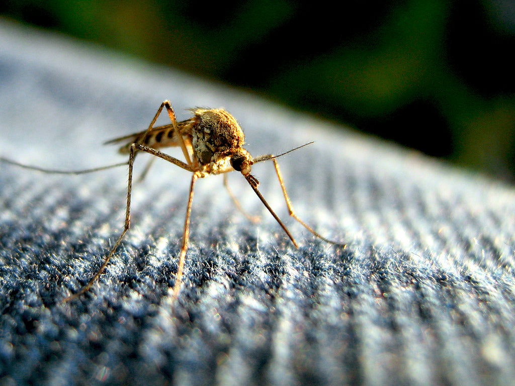 Make sure you're prepared for mosquitos on your hiking holiday