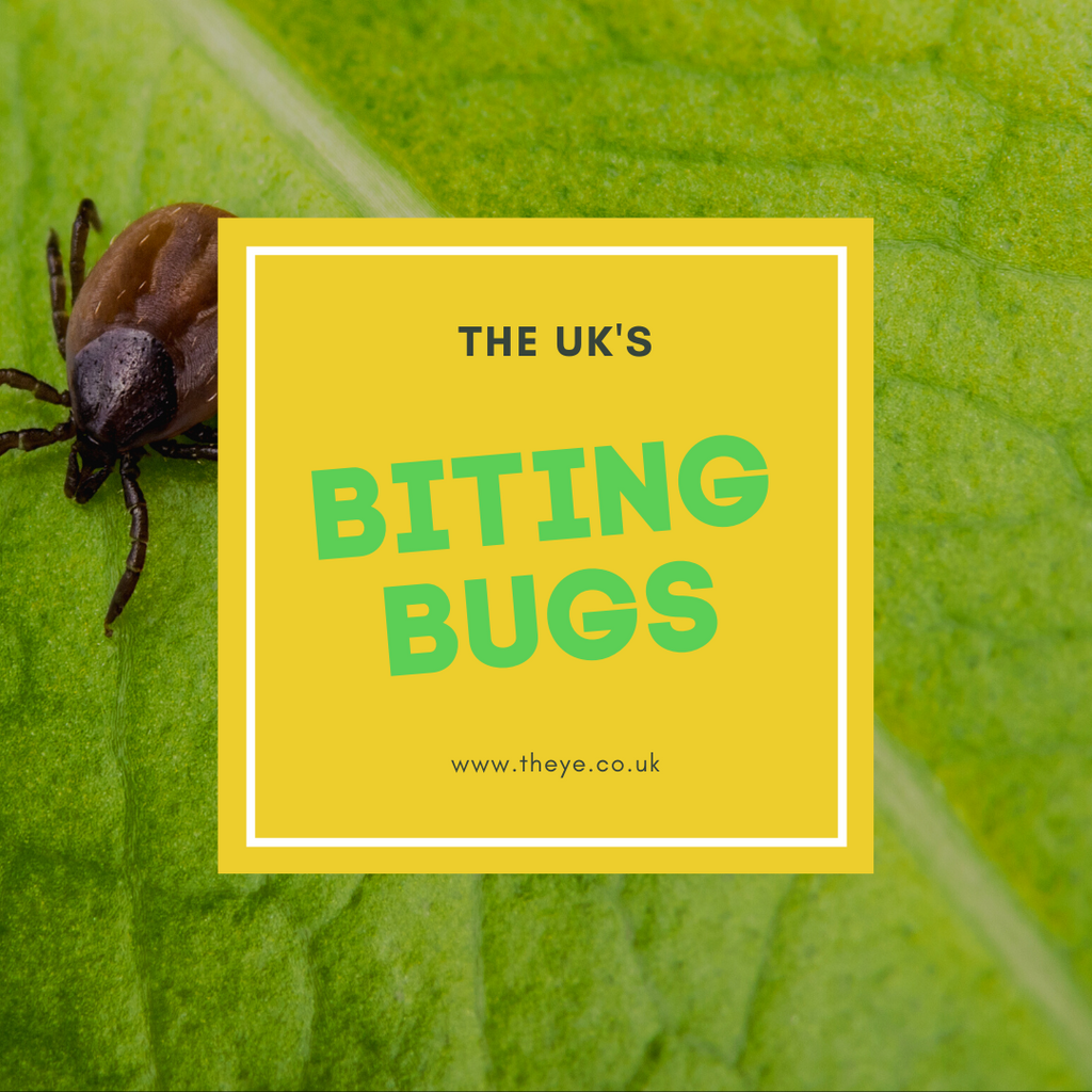 The UK's biting bugs are out in force. Here's how you can stay safe this summer.