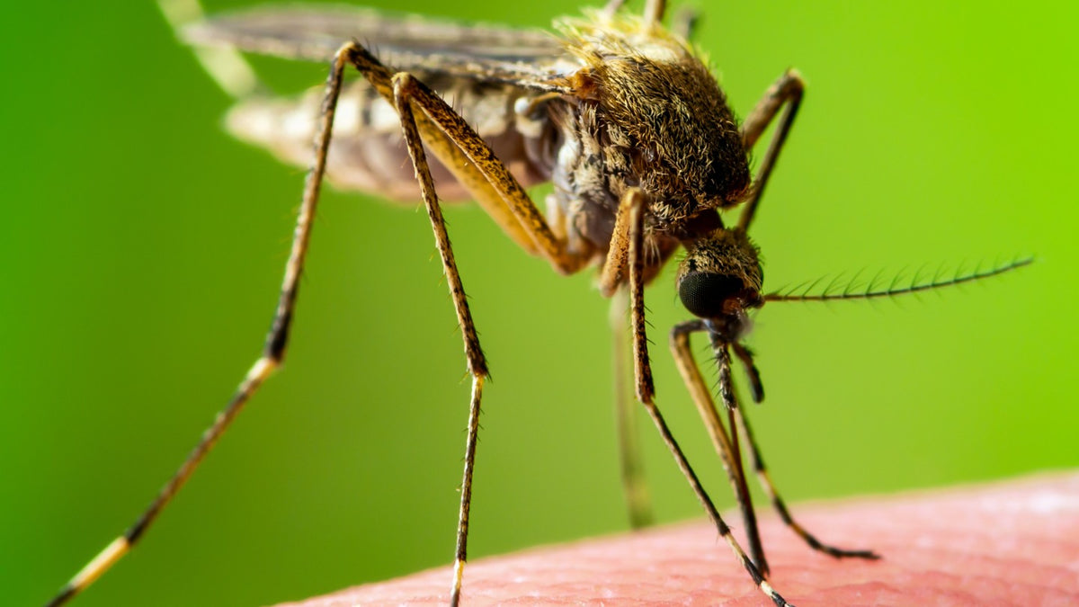 Your mosquito myths busted