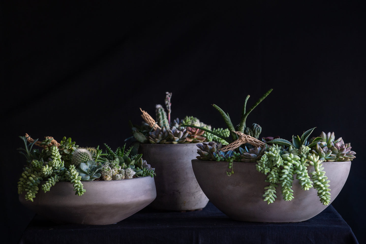Arizona inspired living plant gardens available for next day delivery