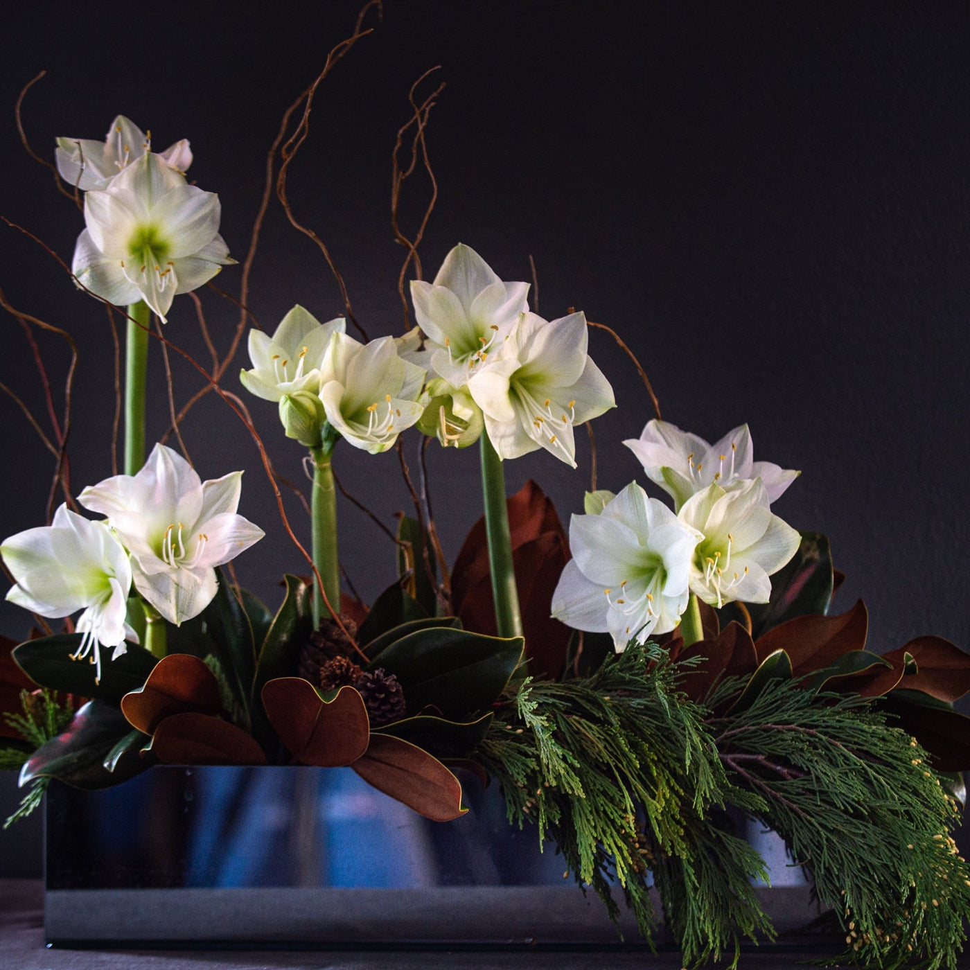 Amaryllis, magnolia leaves and curly willow with holiday greens in a mirrored container.