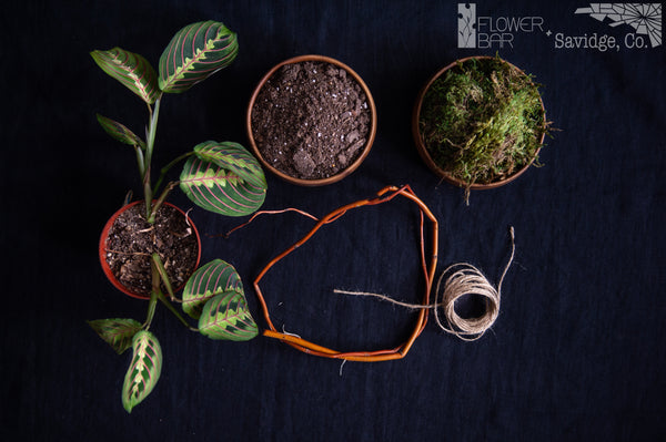 The Forest Plant Project ingredients pictured is a plant, soil, moss, branch, and twine