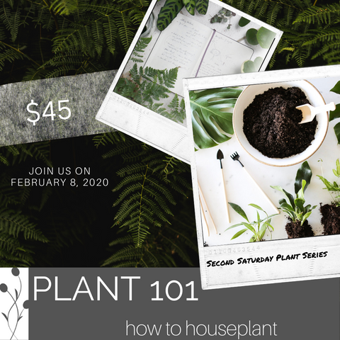 Saturday Plant Series, February 8th @ 1pm