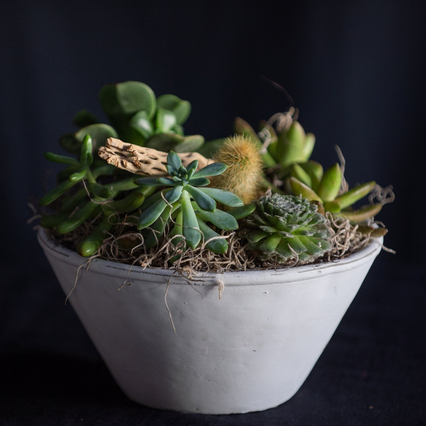 Standard Desert Terrarium is a small bowl filled with succulents and cactus