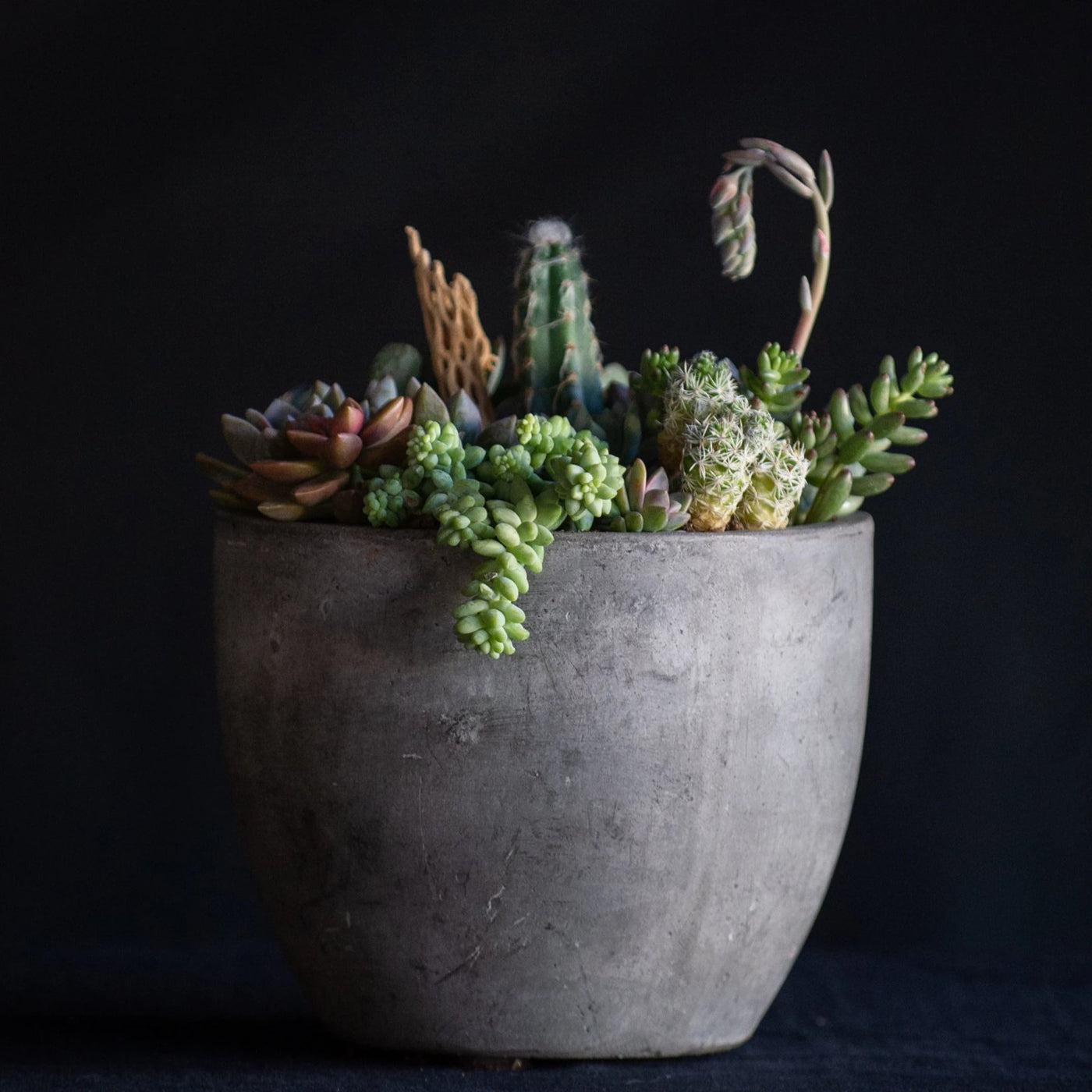 Premium Desert Terrarium - Flower Bar is a a concrete vessel filled with succulents and cacti and finished with a cholla branch