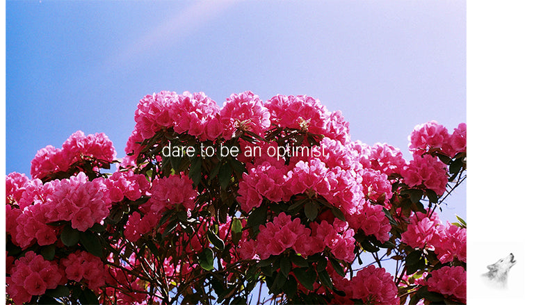 magnet - dare to be an optimist