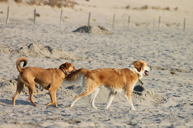The 3 Best Dog Friendly Beaches in The U.S.