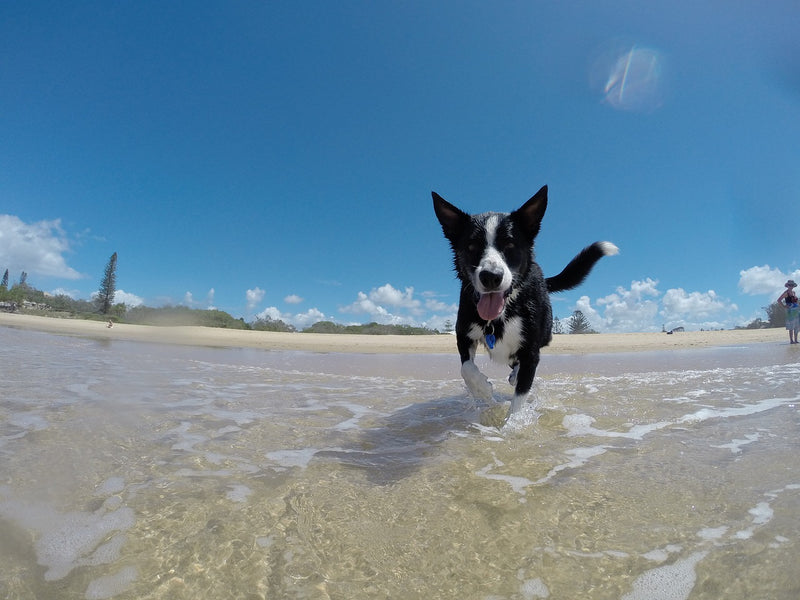 7 Must-Have Summer Accessories for Your Dog!