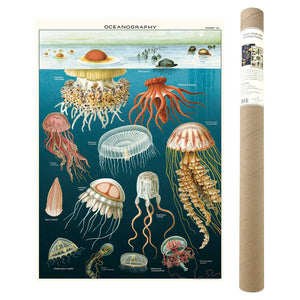 Oceanography Poster and Kit