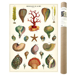 Shells Poster and Kit