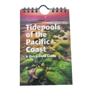 Tide Pools of the Pacific Coast: A Quick Field Guide