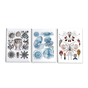 Ernst Haeckel Set of 3 Magnets