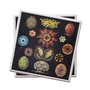 Microscopic Critters Haeckel Coaster