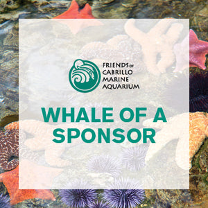 Whale of a Sponsor