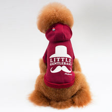 Mustache  Doggy Hoodie - Grey, Red