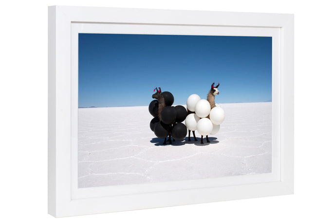 Gray Malin | Llamas Black and White Balloons Mini | Framed
