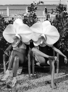 Dina Broadhurst | 'Ladies In Waiting' | Black and White | Unframed