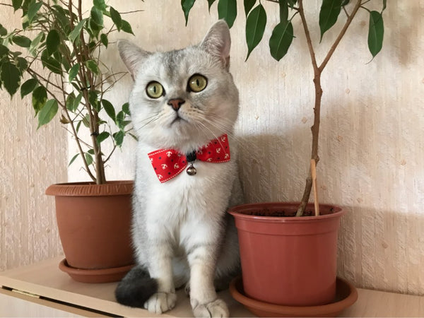 Adjustable Bow Tie For Kittens And Cats, CAT CATTY - CAT CATTY