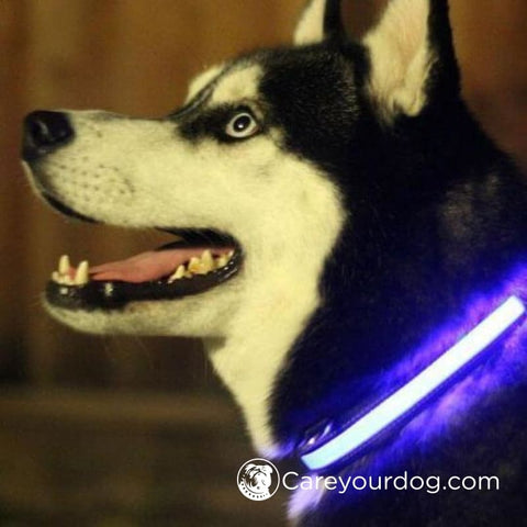 Nite Dawg Led Dog Collar