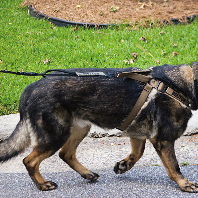 Tactical Dog Leash