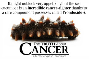 The Anti-Cancer Properties Of Sea Cucumber (video)