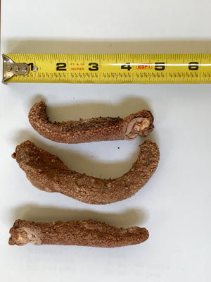Wild-Caught Red Alaskan Sea Cucumbers - .25 lb