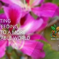 World Breastfeeding Week 2018: Ideas & Resources