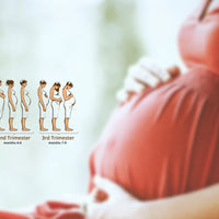 What Are the Stages of Pregnancy? Trimesters Explained