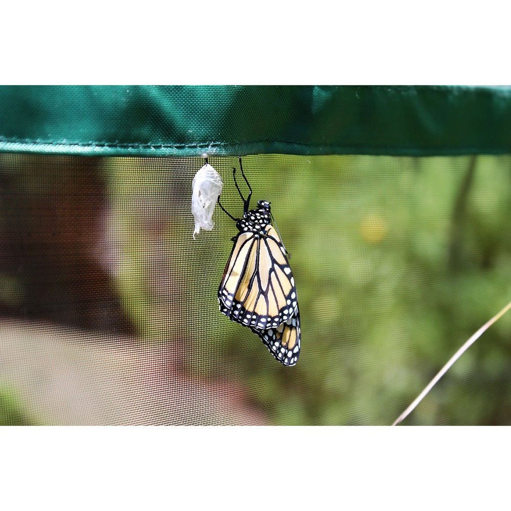 One Inch Series 8 ft. x 7 ft. Pro Butterfly Learning Center
