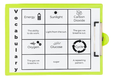 Photosynthesis Science Experiment AdaptEd 4 Special Ed  Vocabulary
