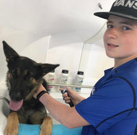 Austin Amos Washing a german shepherd from the shelter.